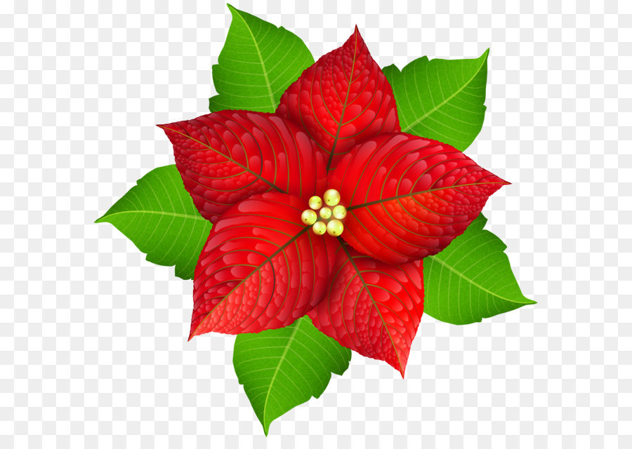 Free PNG Poinsettia Clip Art Download - PinClipart