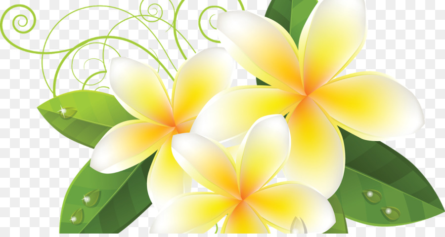 Frangipani Flower Subpng Pngfly