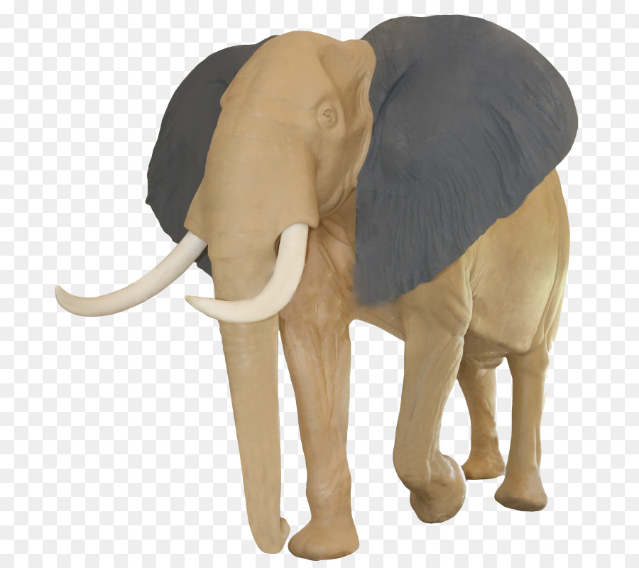 Indian Elephant Download free elephant tusk transparent images in your personal projects or share it as a cool sticker on tumblr, whatsapp, facebook messenger, wechat. subpng