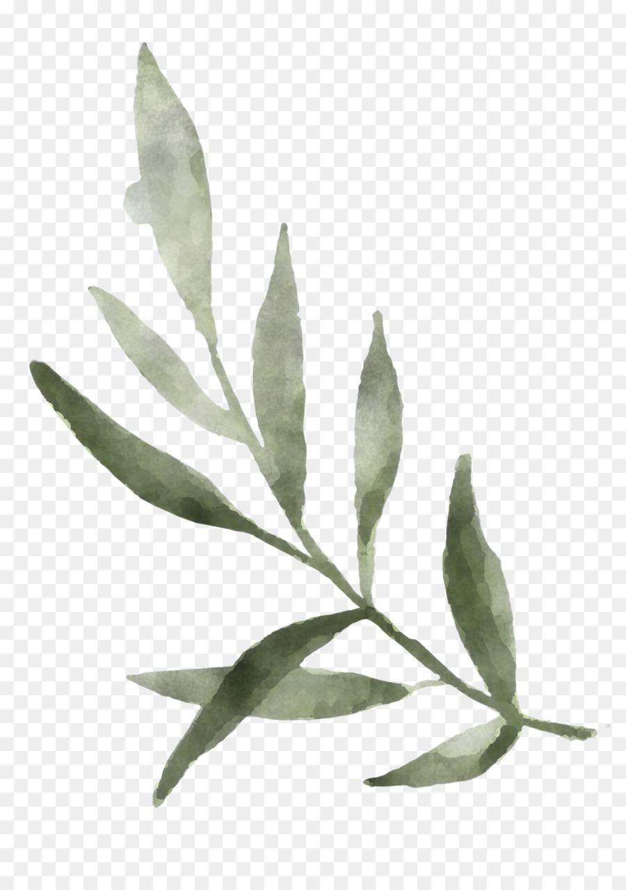 Leaf Plant Flower Tree Bay Leaf Subpng Pngfly