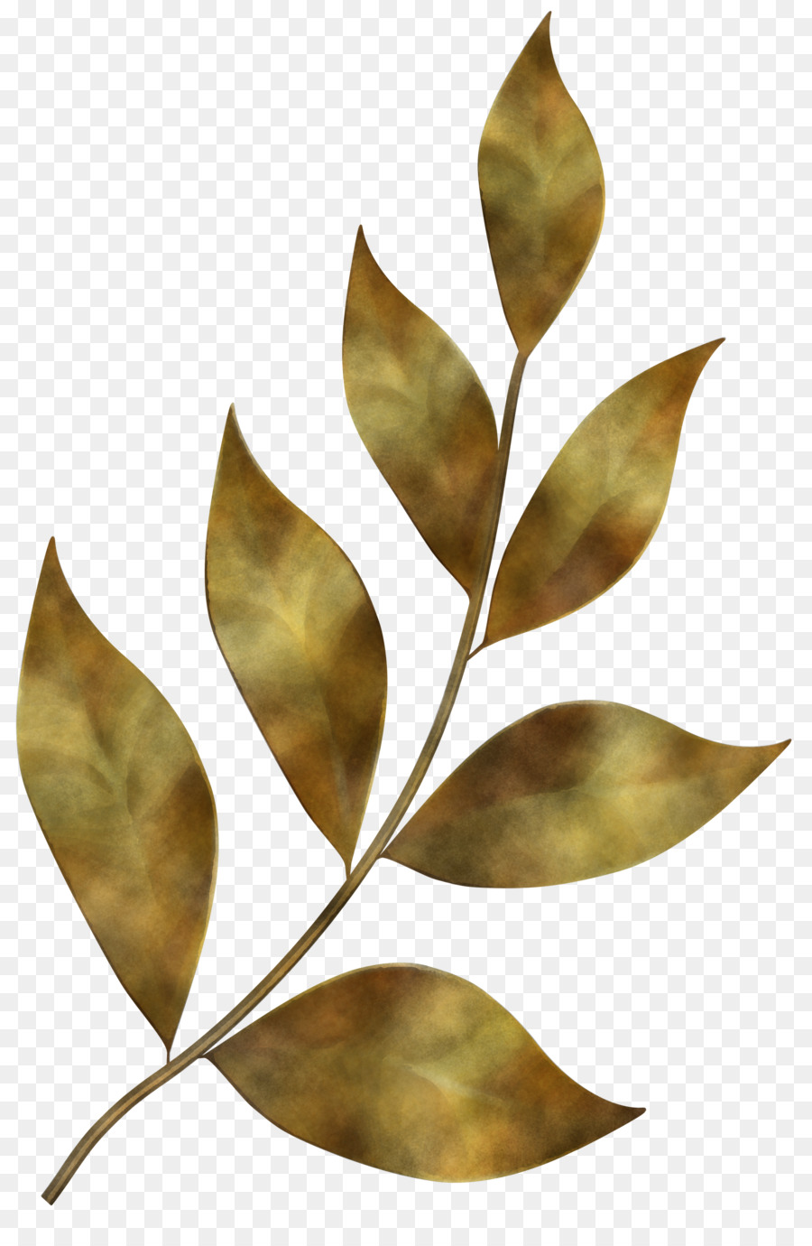 Leaf Plant Tree Flower Bay Leaf Subpng Pngfly